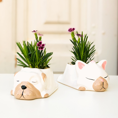 Imagem de Conjunto Cat & Dog - White