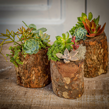 Imagem de categoria Mini Jardins