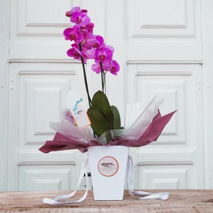 Imagem de Orquídea Presente