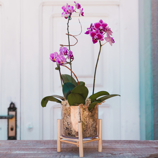 Imagem de Cachepot Mini Orquídea