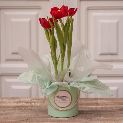 Imagem de Cachepot de Tulipa